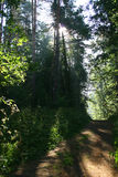 forest manor mihailovskoe path Στοκ Εικόνες