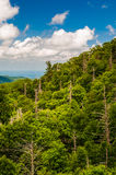 Forest with many dead trees, seen in Shenandoah National Park Stock Image