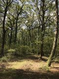 Manziana Forest Italy Royalty Free Stock Image