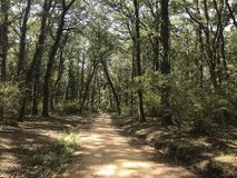 Manziana Forest Italy Royalty Free Stock Images