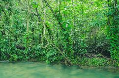Forest on the margim of the Formoso river in Bonito - MS, Brazil. Trees, plants, natural forest and the transparent green water of the river Stock Photos