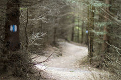Forest marked road. Road through a pine forest in the mountains Stock Photo