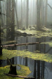 Forest- Marsh Stock Photography