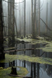 Forest- Marsh Royalty Free Stock Photo