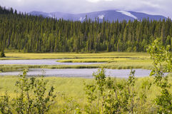 Forest marsh and mountain Stock Photos