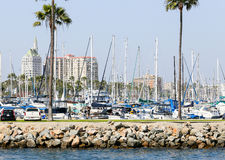 Forest of Masts. Long Beach, USA - June 7, 2014: Looking from Los Angeles River towards Shoreline Marina with lots of masts of boats and yachts. In the back the Stock Photography