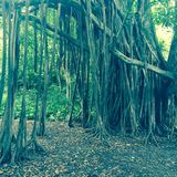 Forest in Maui, Hawaii Royalty Free Stock Photos