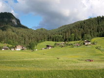 Forest and meadow. Shooting in Gosau village , a beautiful village by Alps in  Austria Stock Photo