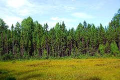 Forest and meadow Stock Photos