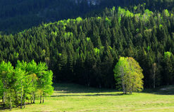 Forest and meadow royalty free stock image