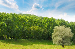 Forest, meadow and blue sky Stock Images