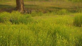Forest Meadow Grass y plantas que soplan en el viento almacen de metraje de vídeo