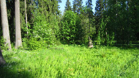 Forest meadow Royalty Free Stock Images