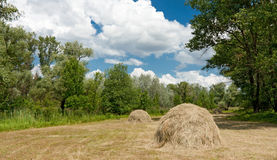 Forest meadow with haystacks Stock Photography