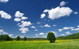Forest meadow in Hungary Stock Photo
