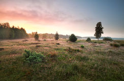 Forest meadow by lake in misty sunrise Stock Photos
