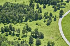 Orest, meadow a road and some cows,  Hohe Wand, Austria royalty free stock photography