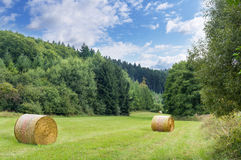 Forest meadow. Royalty Free Stock Photography