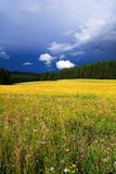 Forest meadow, trees Royalty Free Stock Photography