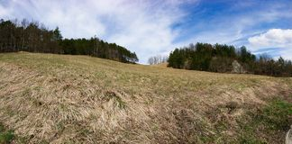 Forest Meadows. Autumn view of forest area.  meadows royalty free stock photography