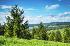 Forest and Meadows Rural Landscape Stock Photography