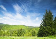 Forest and Meadows Rural Landscape Royalty Free Stock Photos