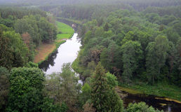 Forest and meandering river Stock Photos