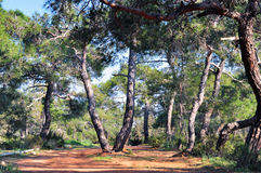 Forest. Mediterranean forest in spring time Stock Images