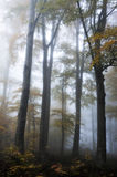 Forest on Medvednica mountain. Covered in autumn fog Stock Photo