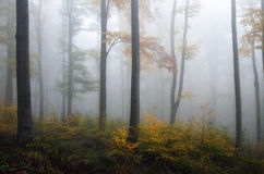 Forest on Medvednica mountain. Covered in autumn fog Royalty Free Stock Images