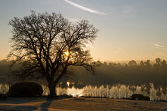 Forest Mere Dawn. Forest Mere at dawn with long shadows and silhouettes Stock Photo