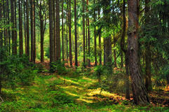 Forest in middle Europe stock photo
