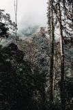 Forest in the middle of mountains on a cloudy morning stock image