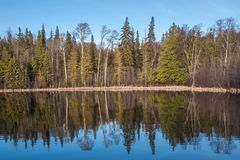 Forest Mirror Image in Canadian Lake royalty free stock images