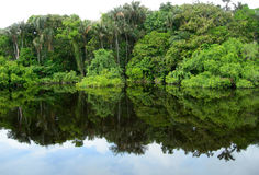 Forest mirrored in a lagoon on the Amazon Stock Images