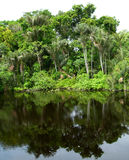 Forest mirrored in a lagoon on the Amazon Royalty Free Stock Images