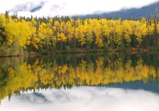 Forest mirrored in lake Royalty Free Stock Photography