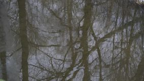 Forest Mirrored in River Surface Background. Forest Trees Mirrored in River Surface Background stock footage