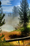Forest mist. Mist appearing to rise from a forest in Yellowstone National Park, Wyoming (USA stock photo
