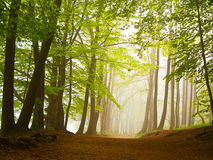 Forest in mist Stock Photo