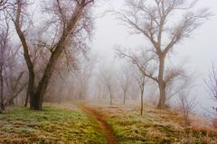 Forest in the mist Royalty Free Stock Images