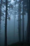 Forest Mist Arkivbilder