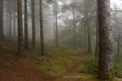 Forest in the mist. Forest in the fog, Madeira, Portugal stock photos