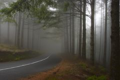 Forest in the mist. Forest in the fog, Madeira, Portugal Royalty Free Stock Images