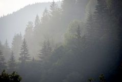 Forest in mist Royalty Free Stock Images