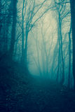 Forest in the mist Stock Image