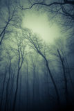 Forest in the mist Royalty Free Stock Image