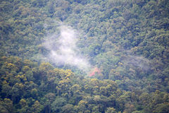 Forest mist. Dense Forest and the mist at KhaoYai National Park, Thailand Stock Photo