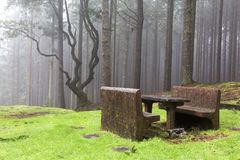 Forest in the mist, Madeira, Portugal Royalty Free Stock Images