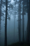 Forest Mist Stock Images